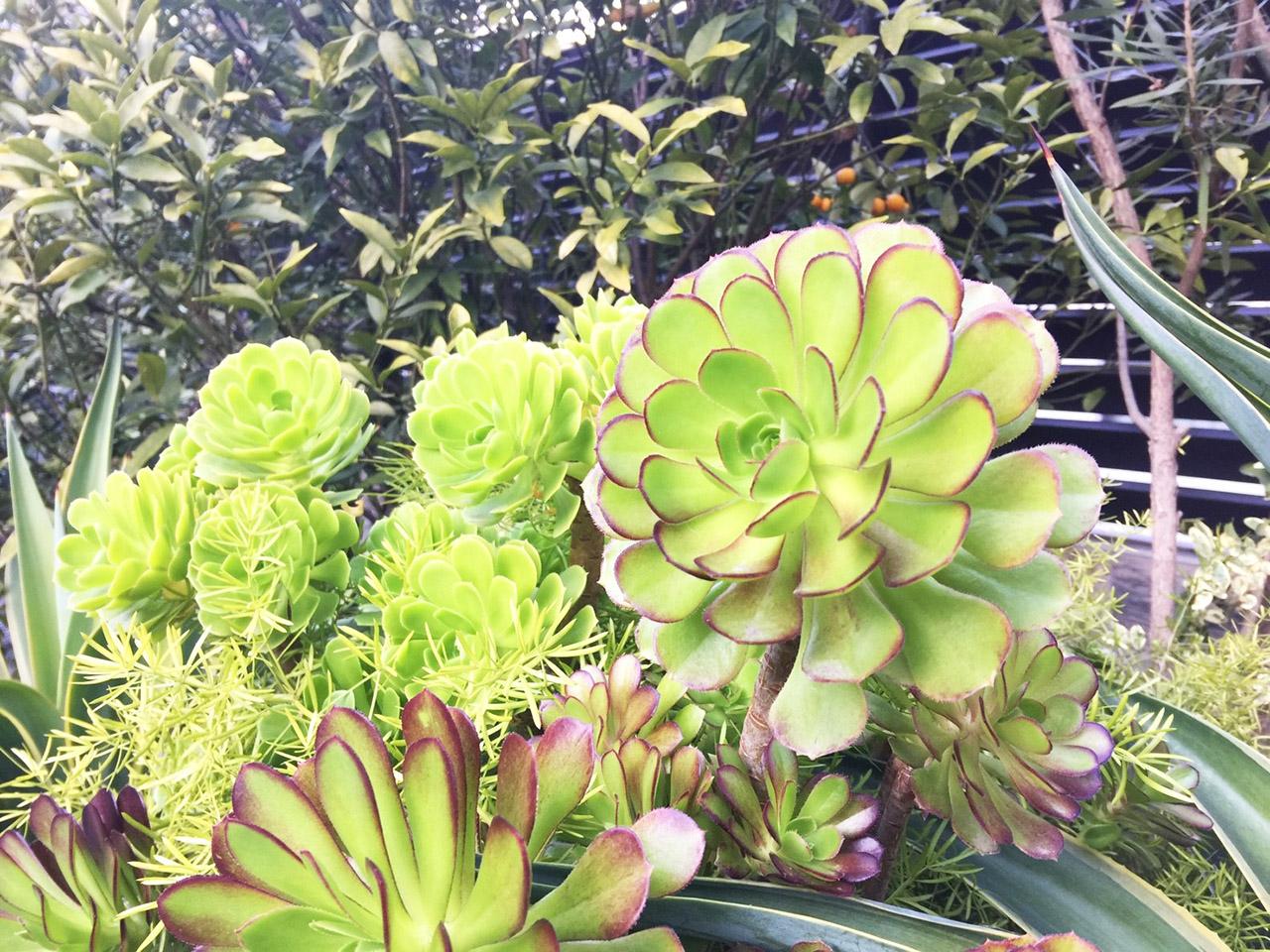 翠綠的多肉植物