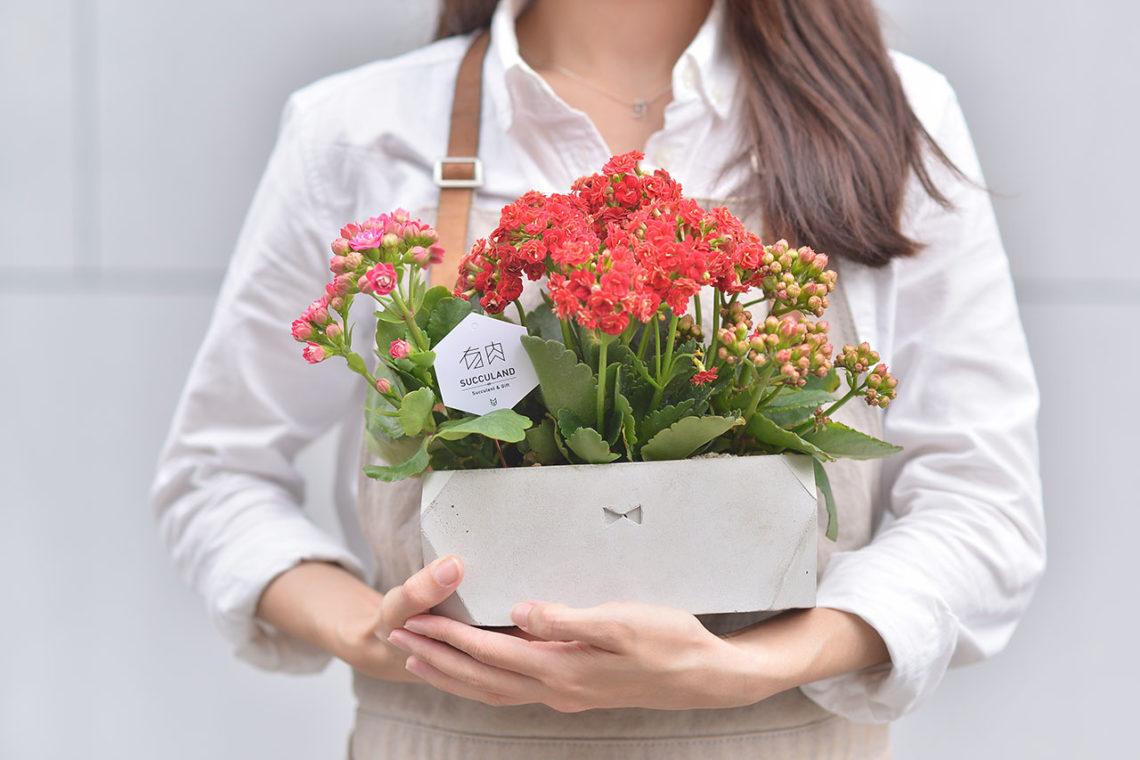 開幕送禮推薦盆栽!把最療癒的多肉植物搭配台灣設計師設計盆器,組合成的盆栽最適合開店送禮,圖為長壽花及水泥盆