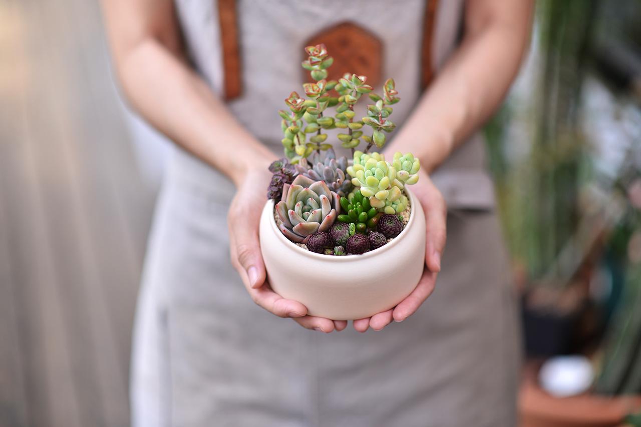 療癒心靈的小盆栽