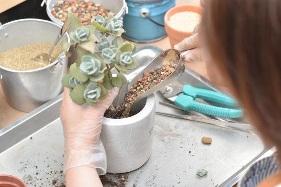 植物修剪與施肥