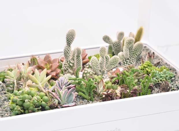 生態箱 15