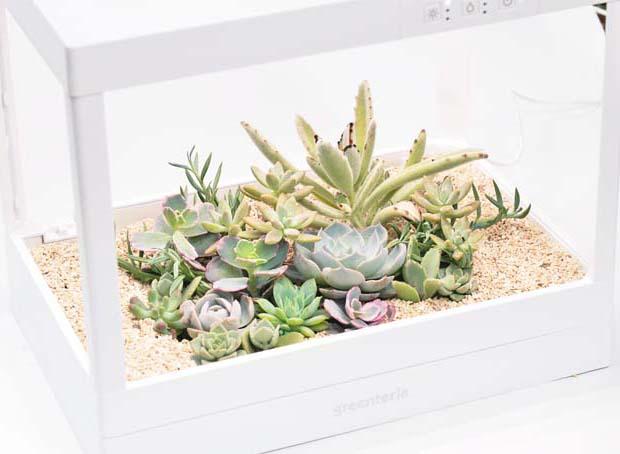 生態箱 10
