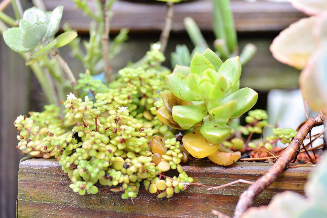 植物蟲害注意
