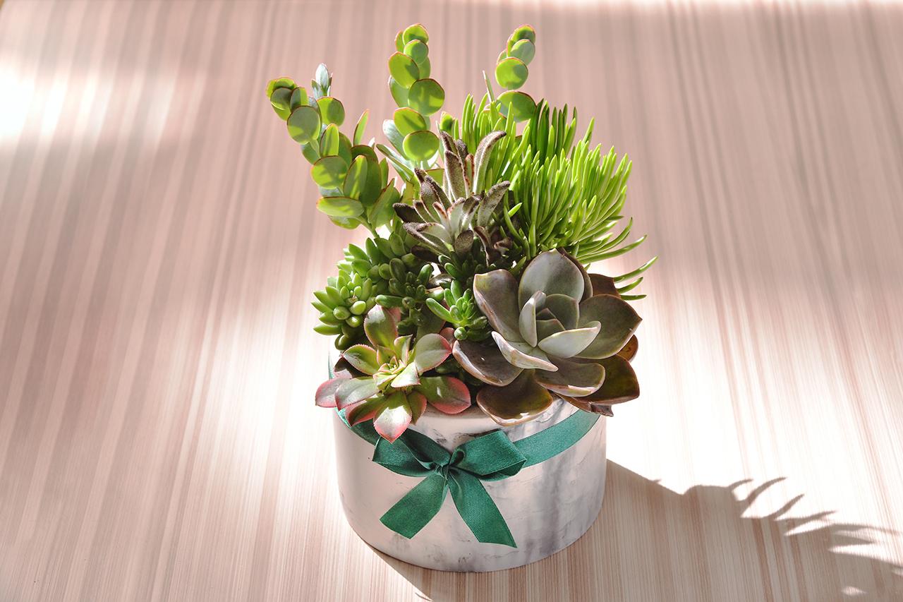 充滿綠意的多肉植物正合適送到高雄當禮物了,因為綠色總能給人一種清涼舒服的感覺,這是一種親近自然的天性