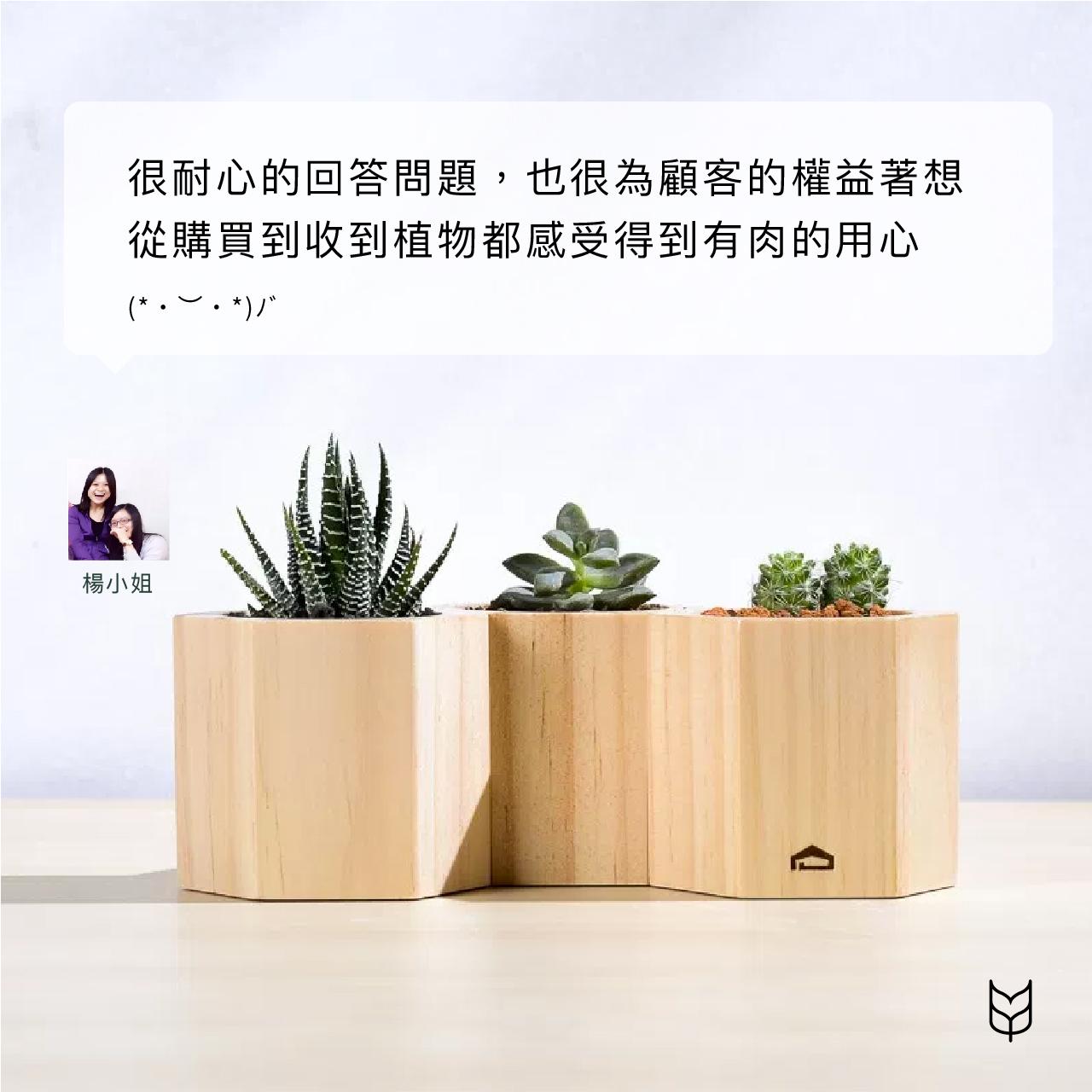 多肉蜂巢木盒 3 0623 客戶的聲音版型 v1 07