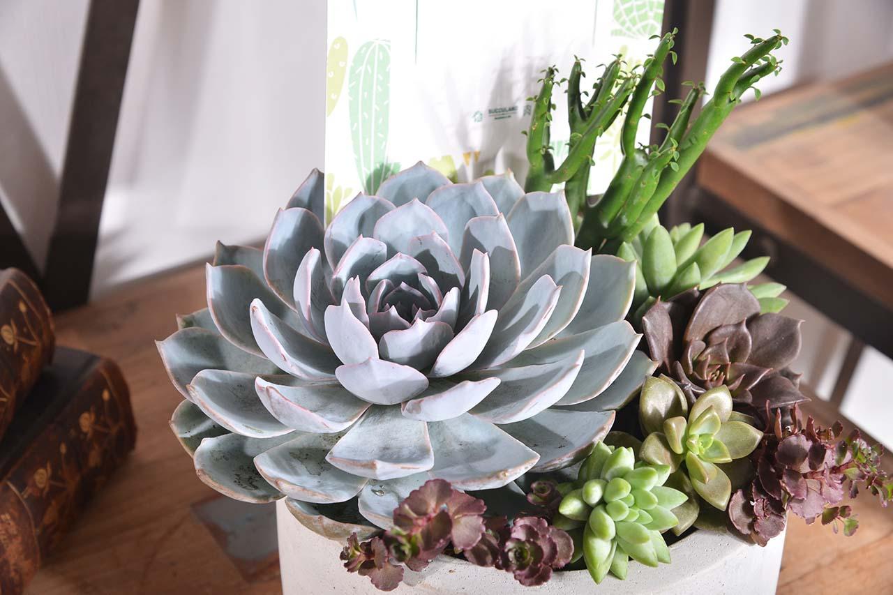 柔和又繽紛的色彩組合盆栽!以藍色為主調,佐以綠色即淡紅色的色彩組盆!