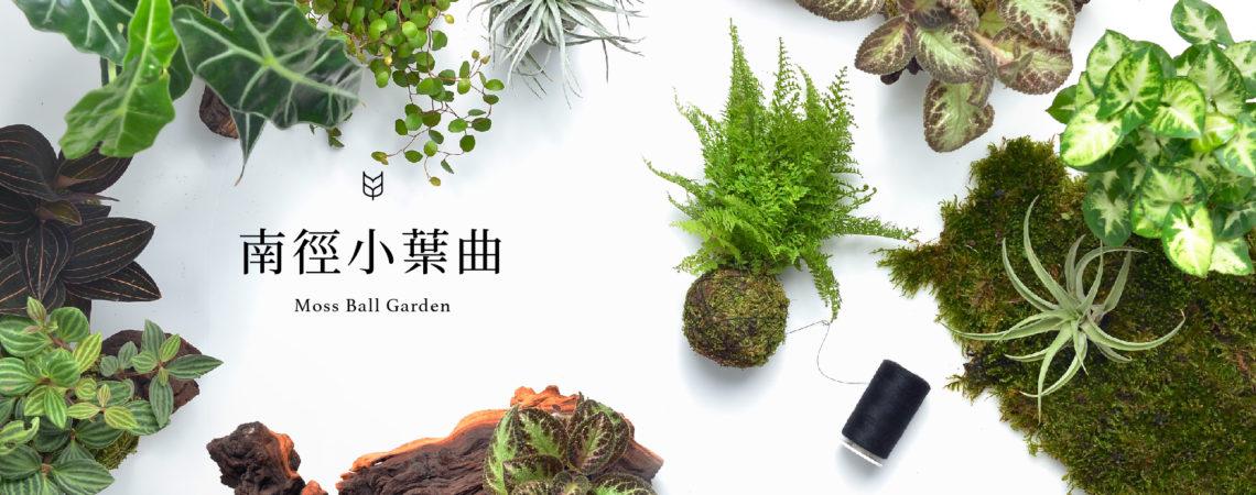 苔球製作課,多肉植物手作課程