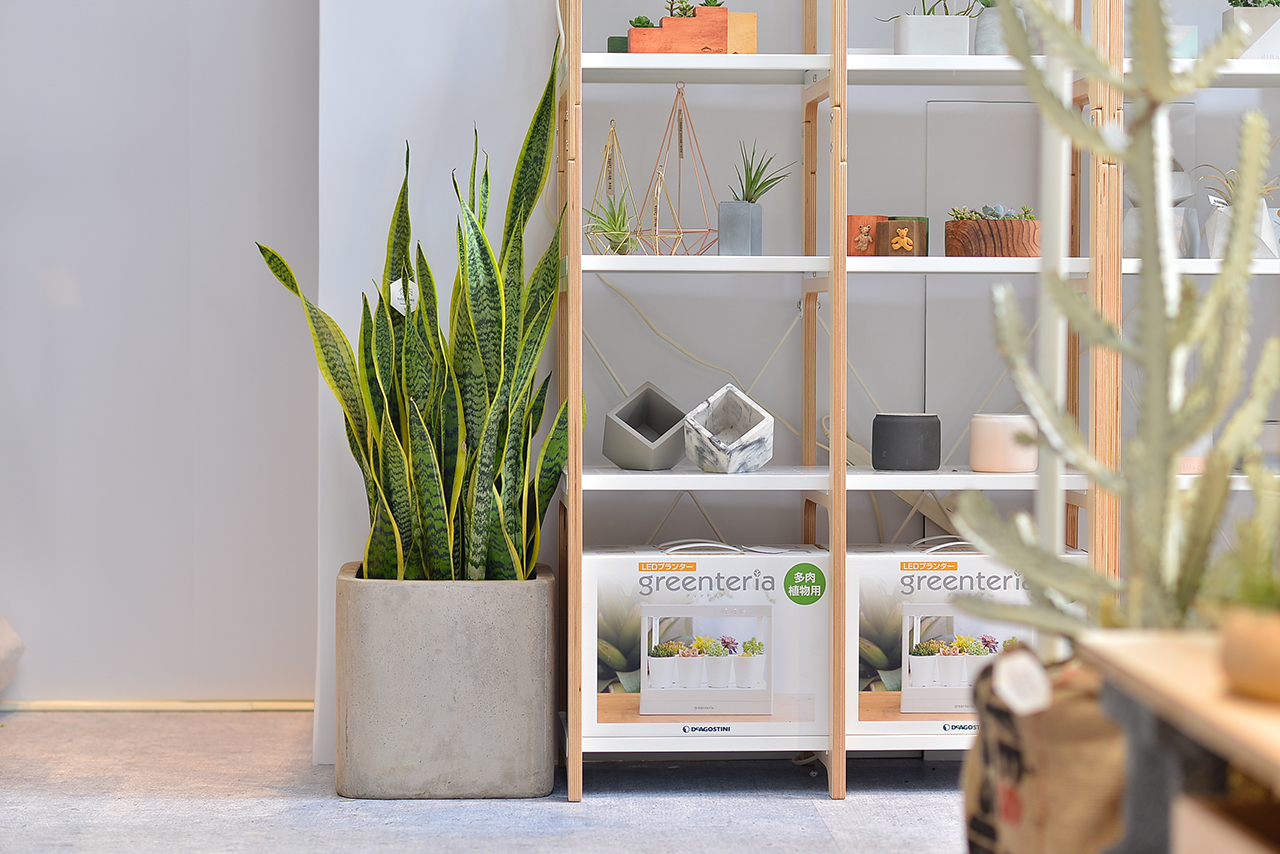 虎尾蘭盆栽的新設計!五種美好呈現
