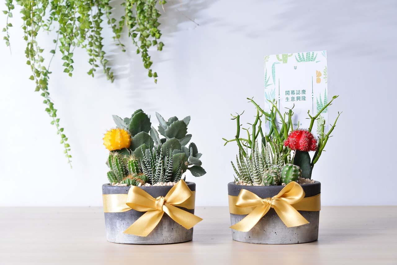 多肉植物雙盆栽組合,適合送禮物給老師