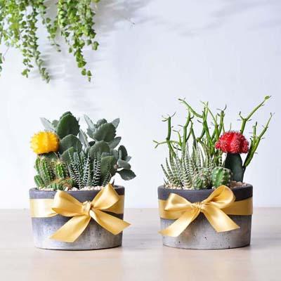 一次送兩盆,好搭配又有好寓意的盆栽
