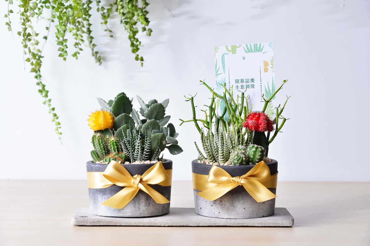 緋牡丹錦, 十二之卷, 千兔耳, 綠珊瑚 組合成的多肉植物盆栽組是開店送禮的好選擇