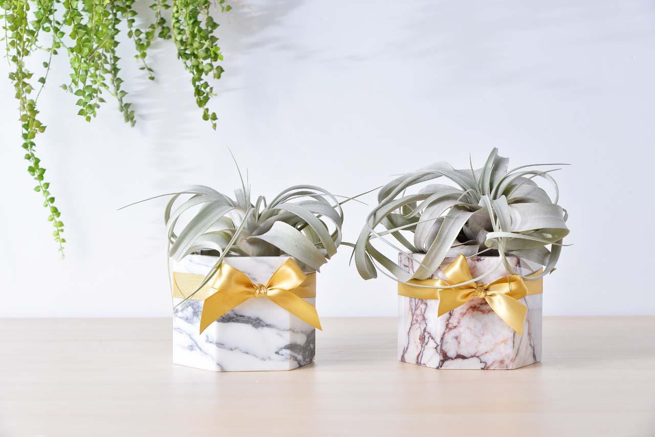空氣鳳梨 大理石盆栽 多肉植物 開幕禮物 升官禮物 喬遷誌喜