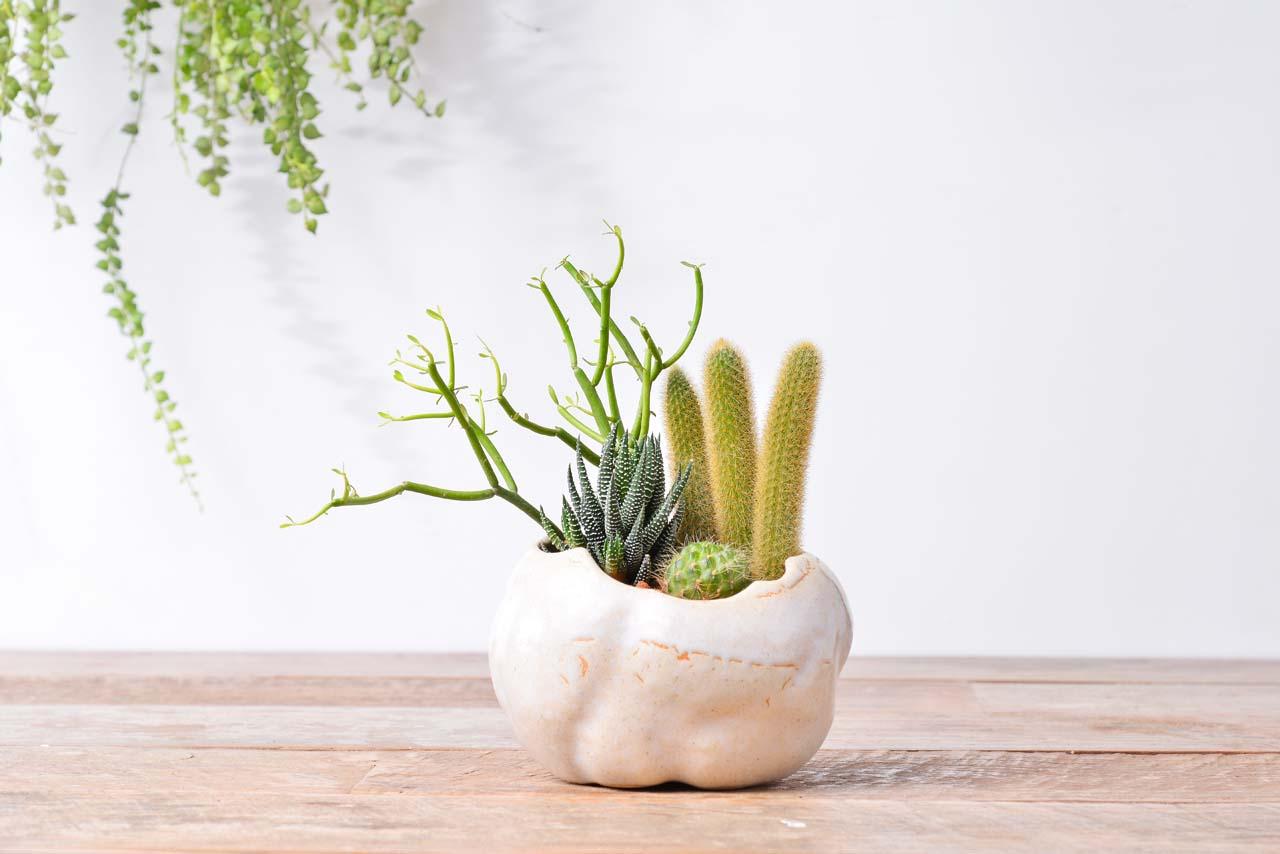 飽滿形狀的桌上盆栽
