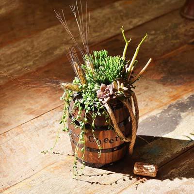 酒桶造型特殊花藝盆栽禮物