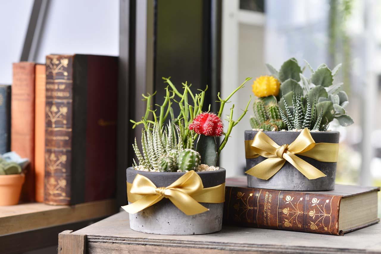 石紋盆栽適合粗獷的工業風設計咖啡店