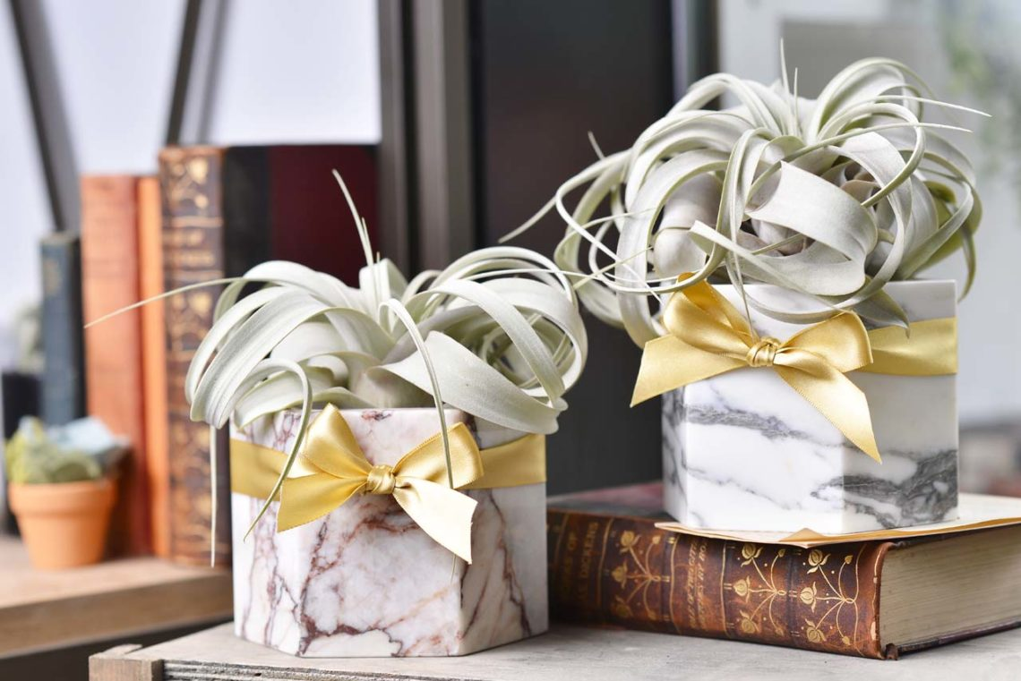升遷禮物推薦,空氣鳳梨與大理石花器,高質感的升遷送禮
