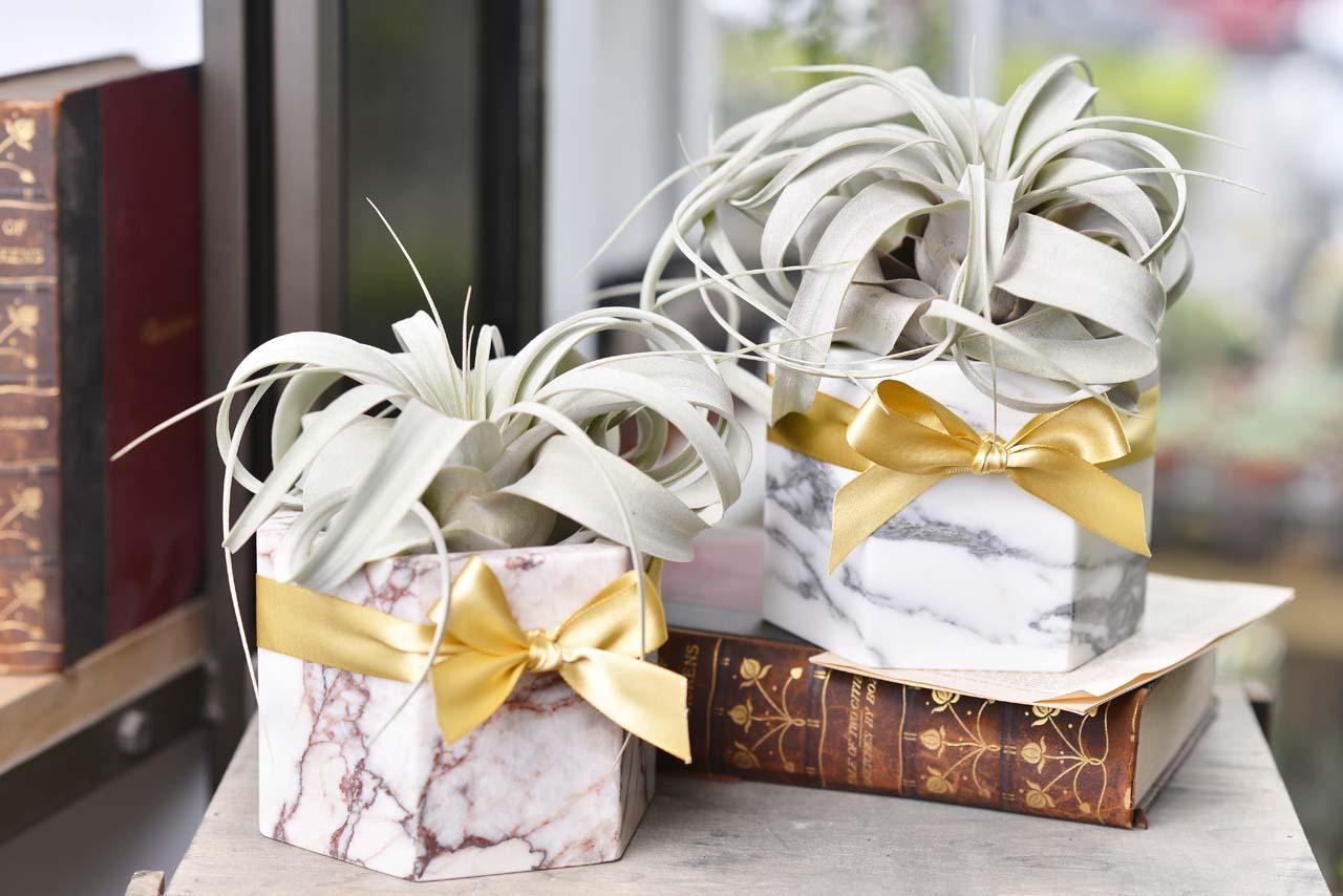 空氣鳳梨盆栽,搭配台灣設計師花器