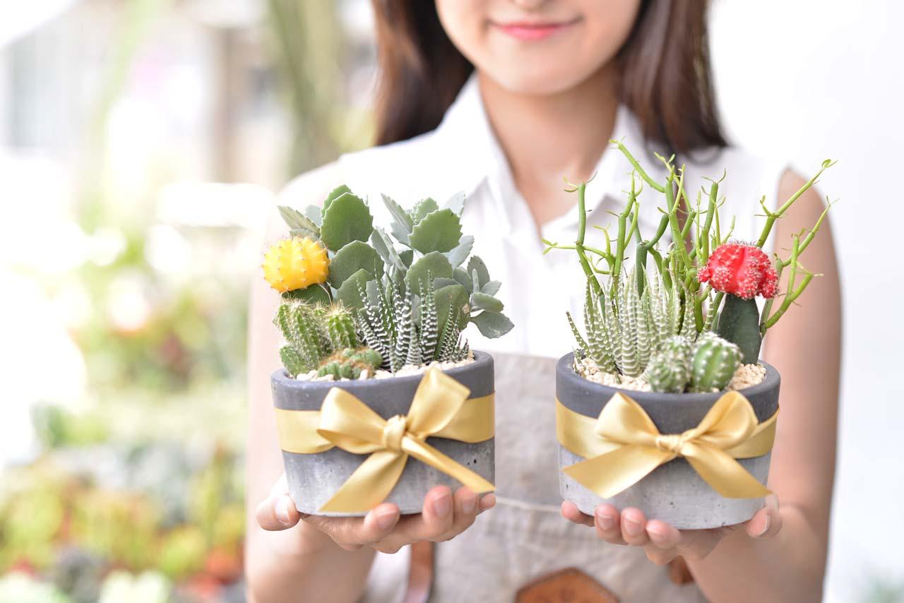 緋牡丹錦, 十二之卷, 千兔耳, 綠珊瑚 多肉植物組盆升官送禮雙盆組