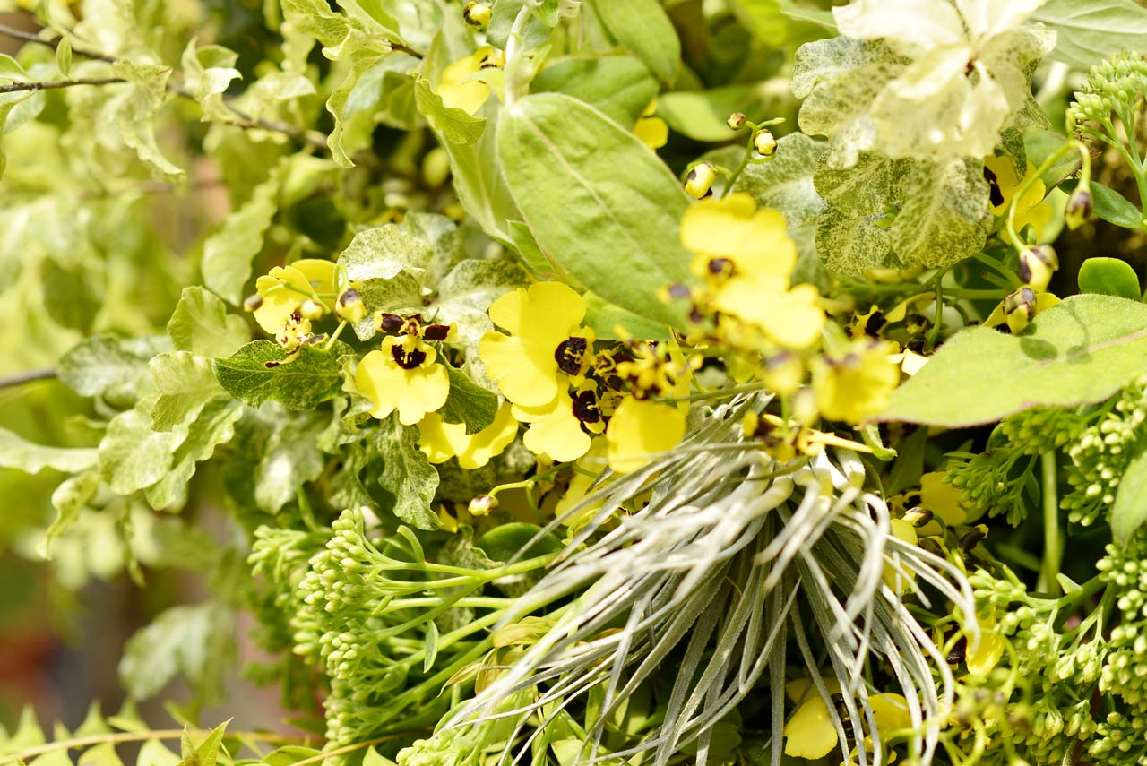 查查花的花藝就是一種植物美學的生活體驗,讓插花帶入生活,讓生活中充滿花藝