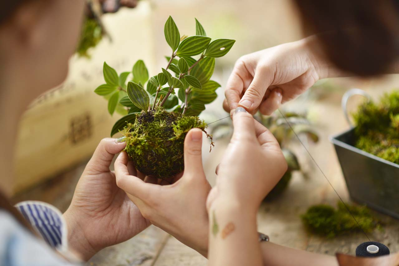 苔球也稱為水苔球、苔玉,是非常新潮有存在感的一種植栽形式,在老師的教學帶領下,相信你也可以輕鬆學會