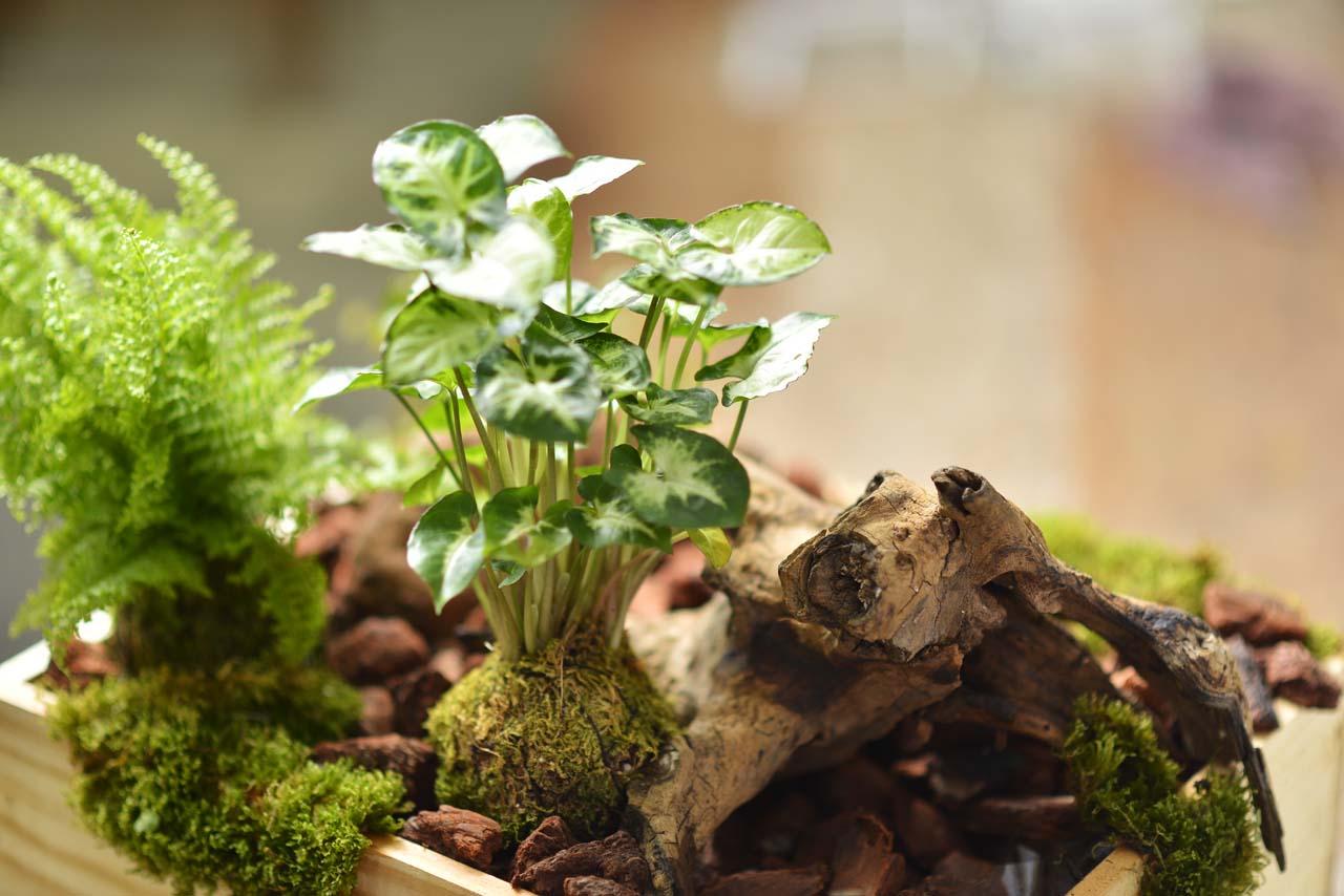 觀葉植物是相當好照顧的植物總類,而綠色的葉子搭配綠色的苔球讓整個室內充滿綠意