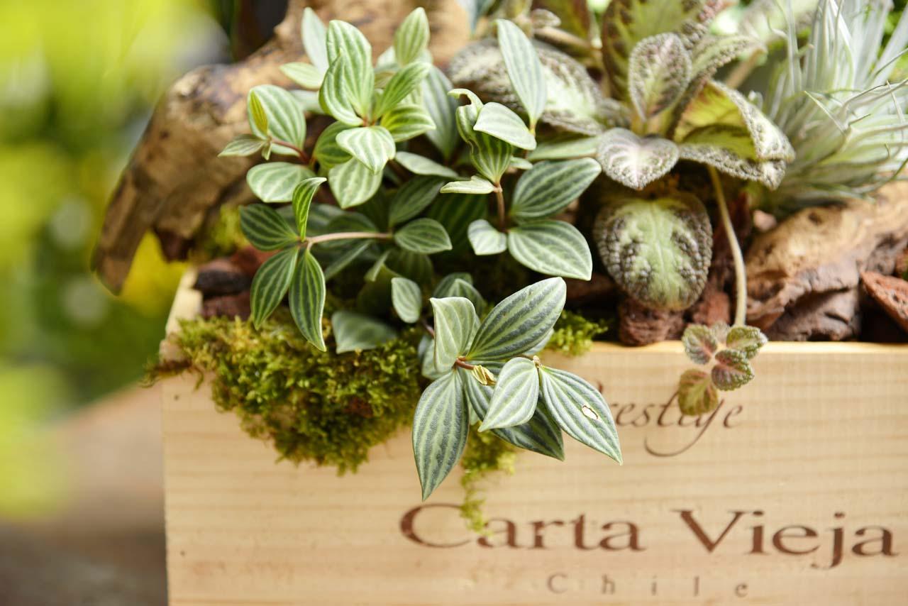 選擇特別適合擺放在室內的多肉植物,讓這一堂課充滿綠意,葉型的美麗讓你花藝充滿可能性