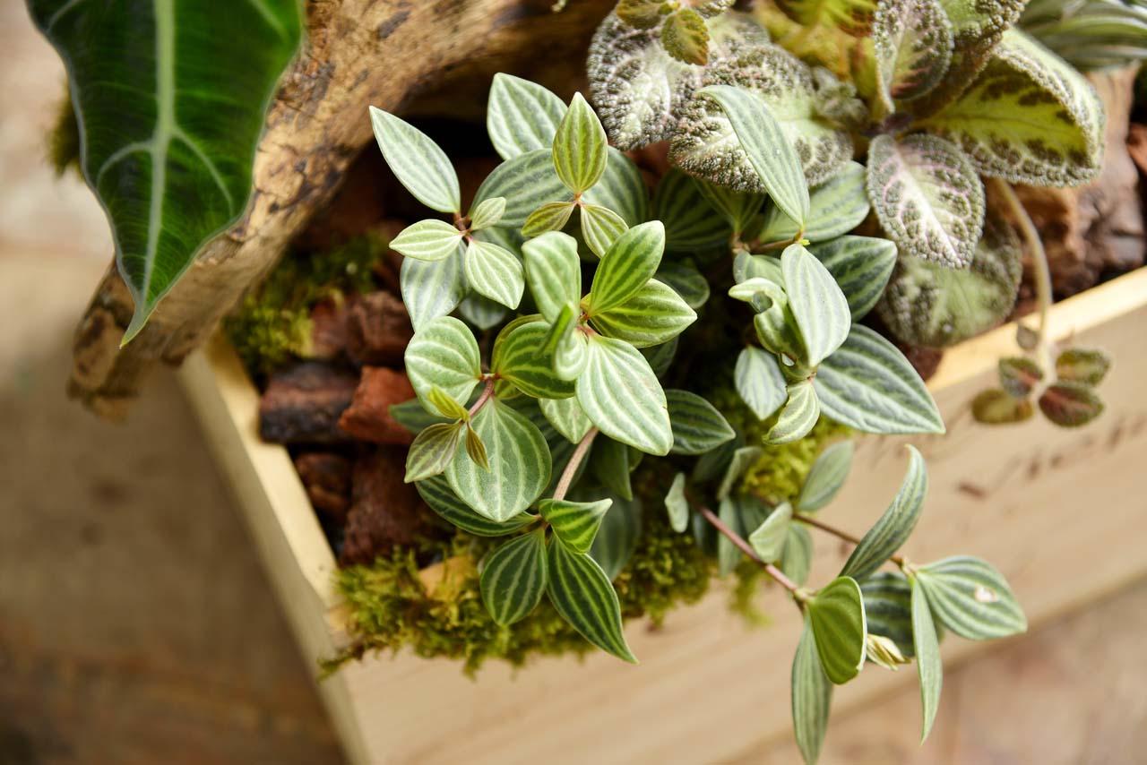 查查花品牌介紹,崇尚自然,關注質感,希望讓植物與花藝融入於生活之中