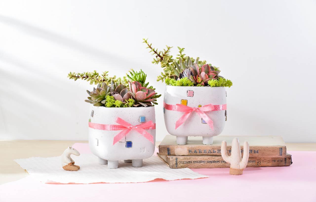 有緞帶、禮物包裝的盆栽