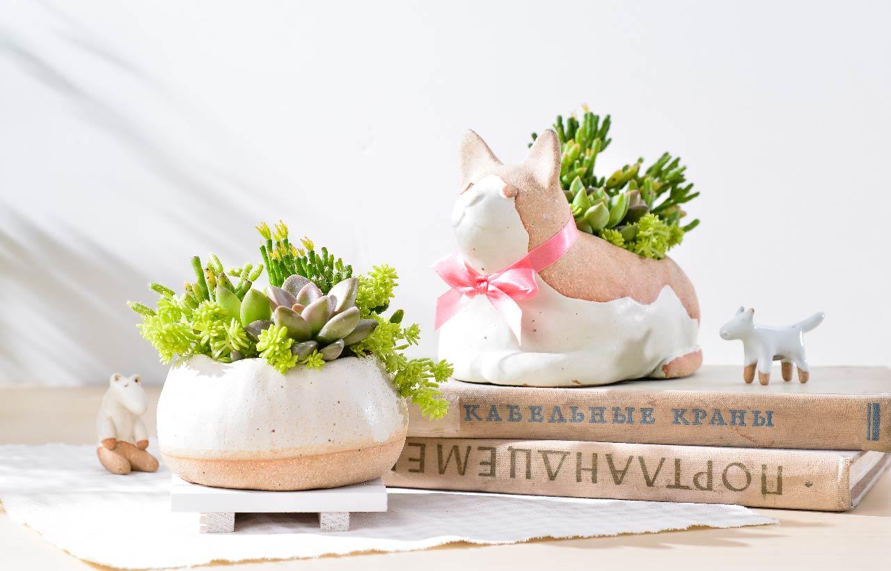 小可愛的貓咪雙盆組盆栽禮物,由專人專車幫你送到高雄,不用擔心植栽的翻覆與完整性