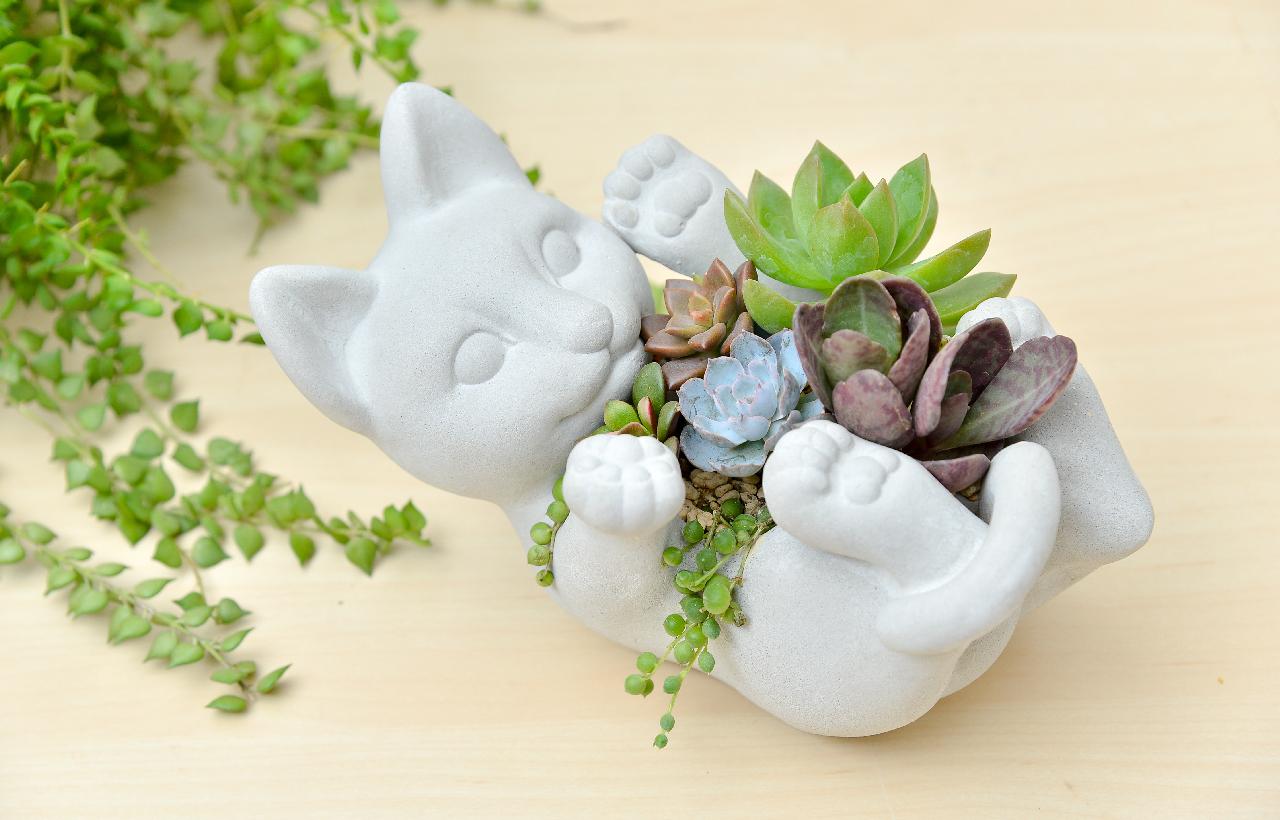 可以送招財貓組合盆栽當禮物