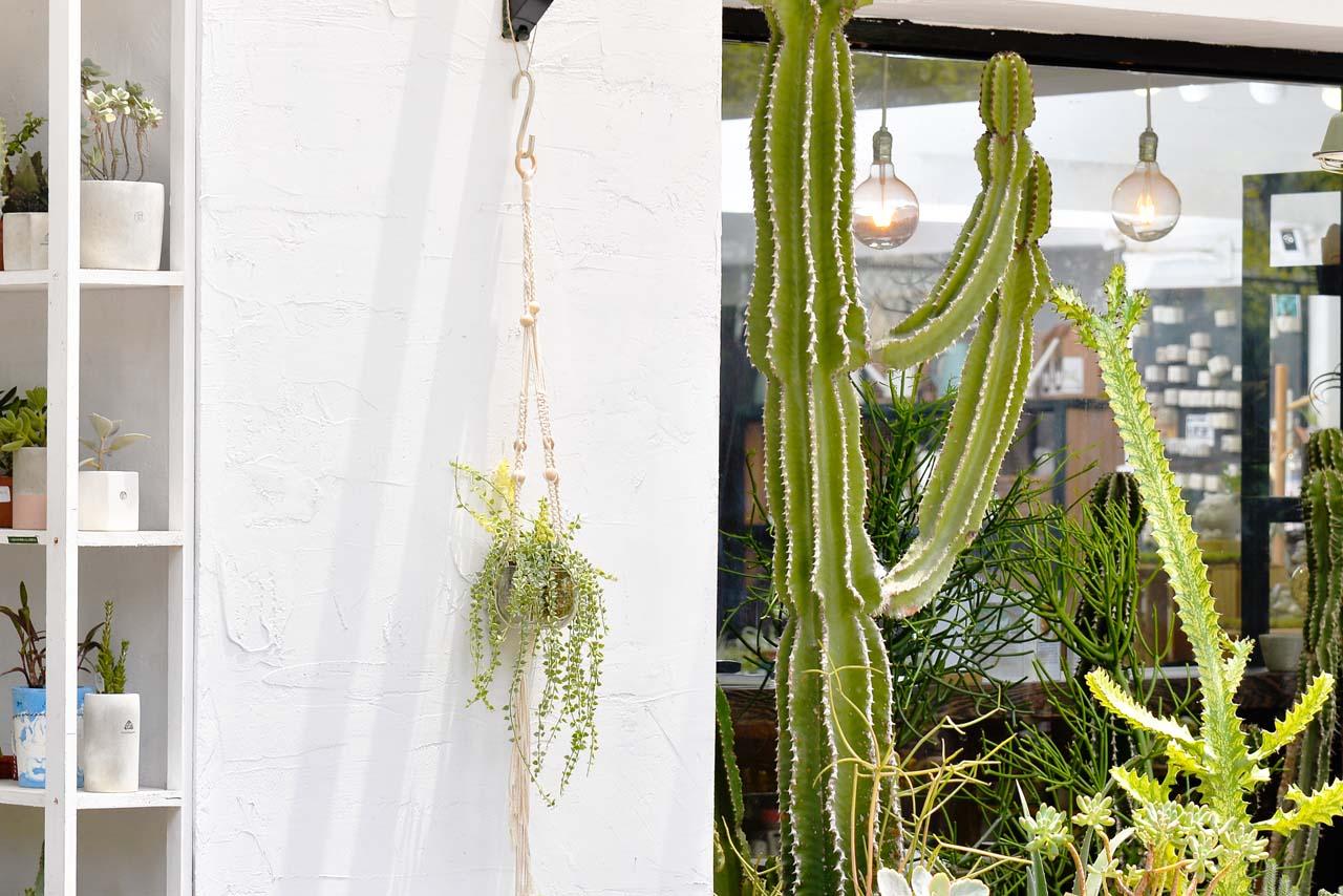編織吊繩可以讓你的庭園延伸到高處,也讓景色更多變