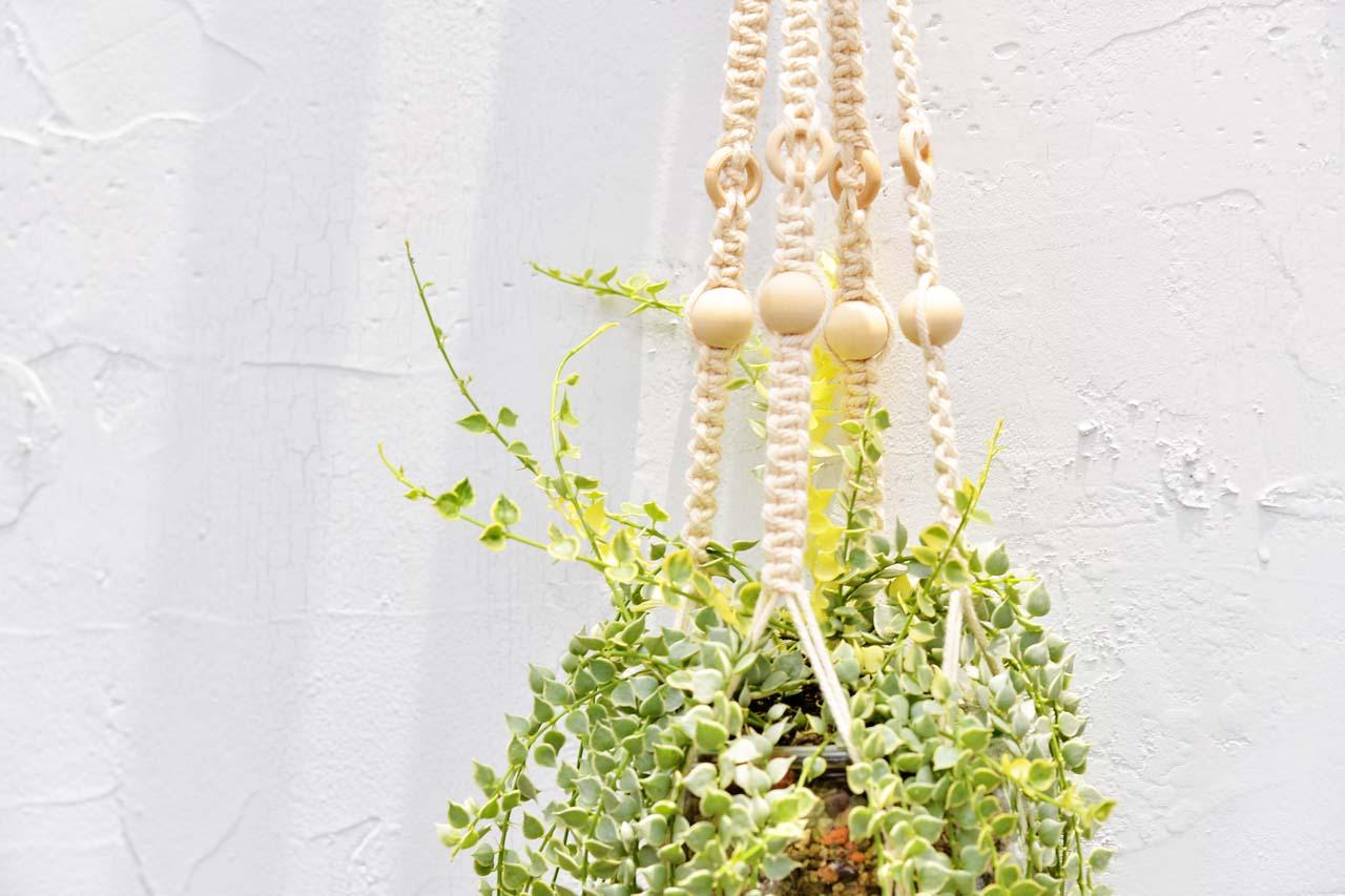 百萬心錦 多肉 編織掛繩課程加上多肉植物盆栽