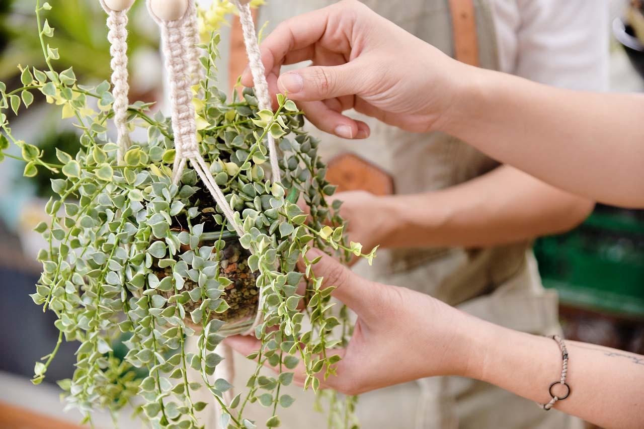 除了學習編織的技巧外,阿皮老師也會傳授給大家關於多肉植物養護的教學