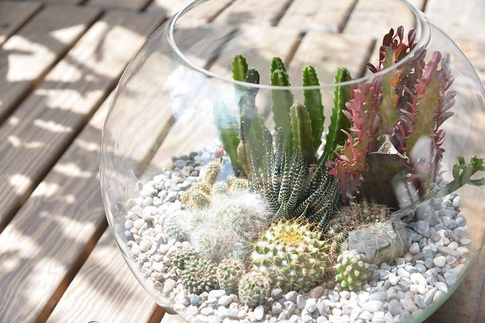 大玻璃缸組合盆栽的養護方式,種植需求都在有肉可以找到幫助
