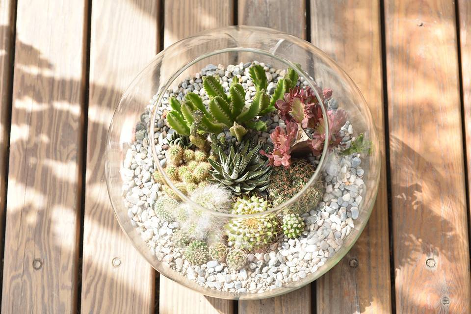 透明的玻璃魚缸中近多肉植物更顯貴氣