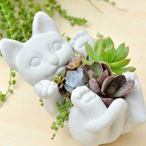 多肉植物 多肉 禮物 貓咪 喵星人 生日禮物 黃麗 綠之鈴 老樂 虎斑伽藍葉 姬朧月 貓掌