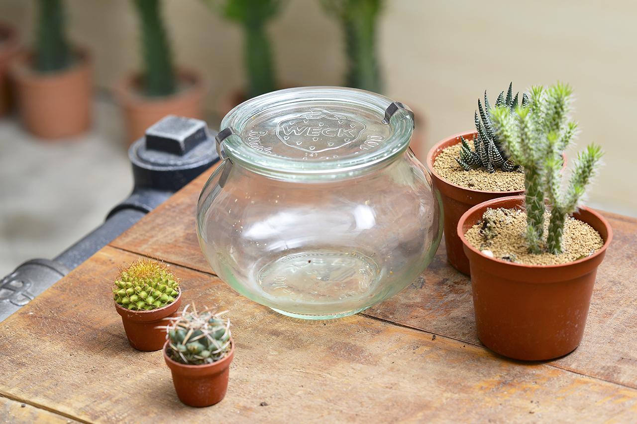 玻璃瓶盆栽建議選用仙人掌科的植物來種植