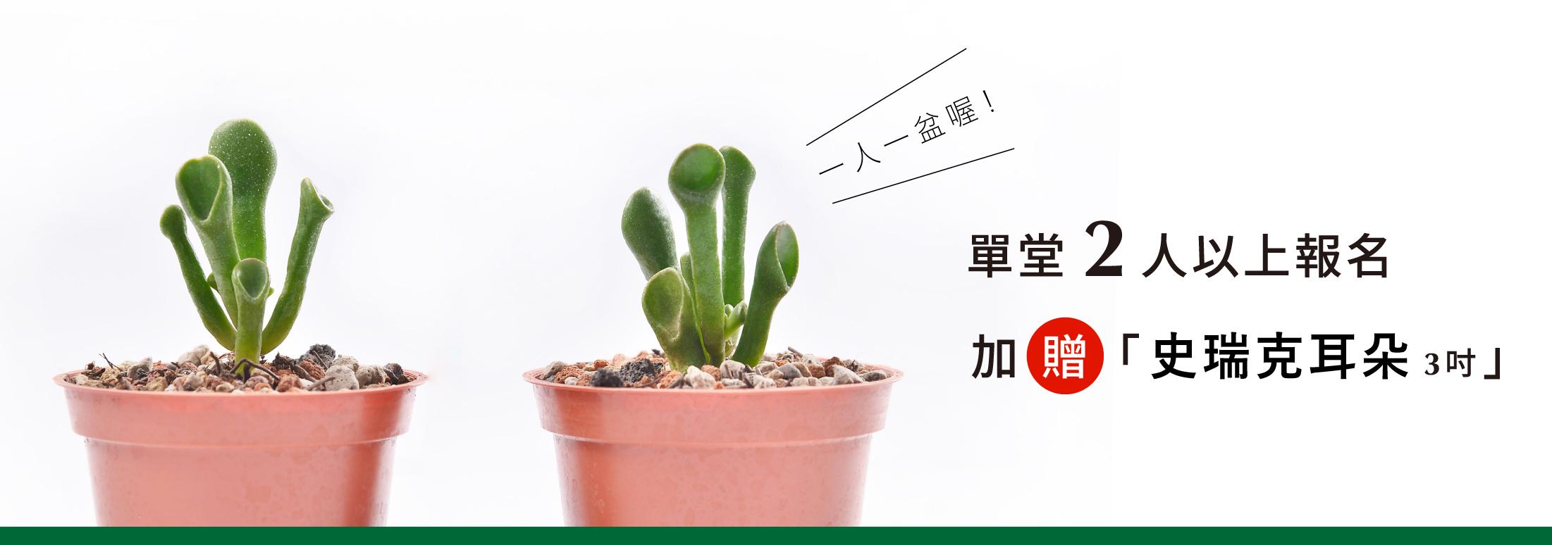 報名插花課程,團報時,學員可以享受到團報優惠贈送多肉植物