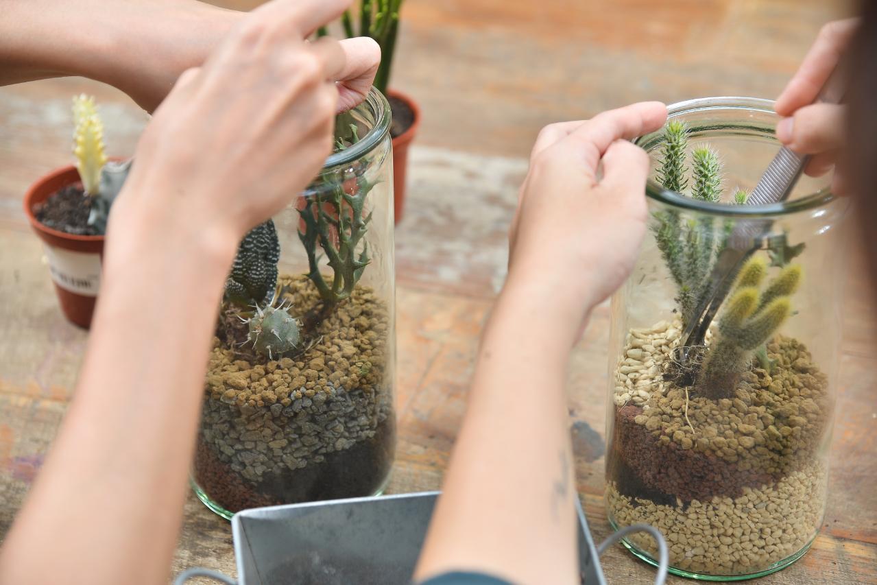 組合盆栽的訣竅都會在這一堂課教給大家,而面對不同口徑的盆該如何組合呢?