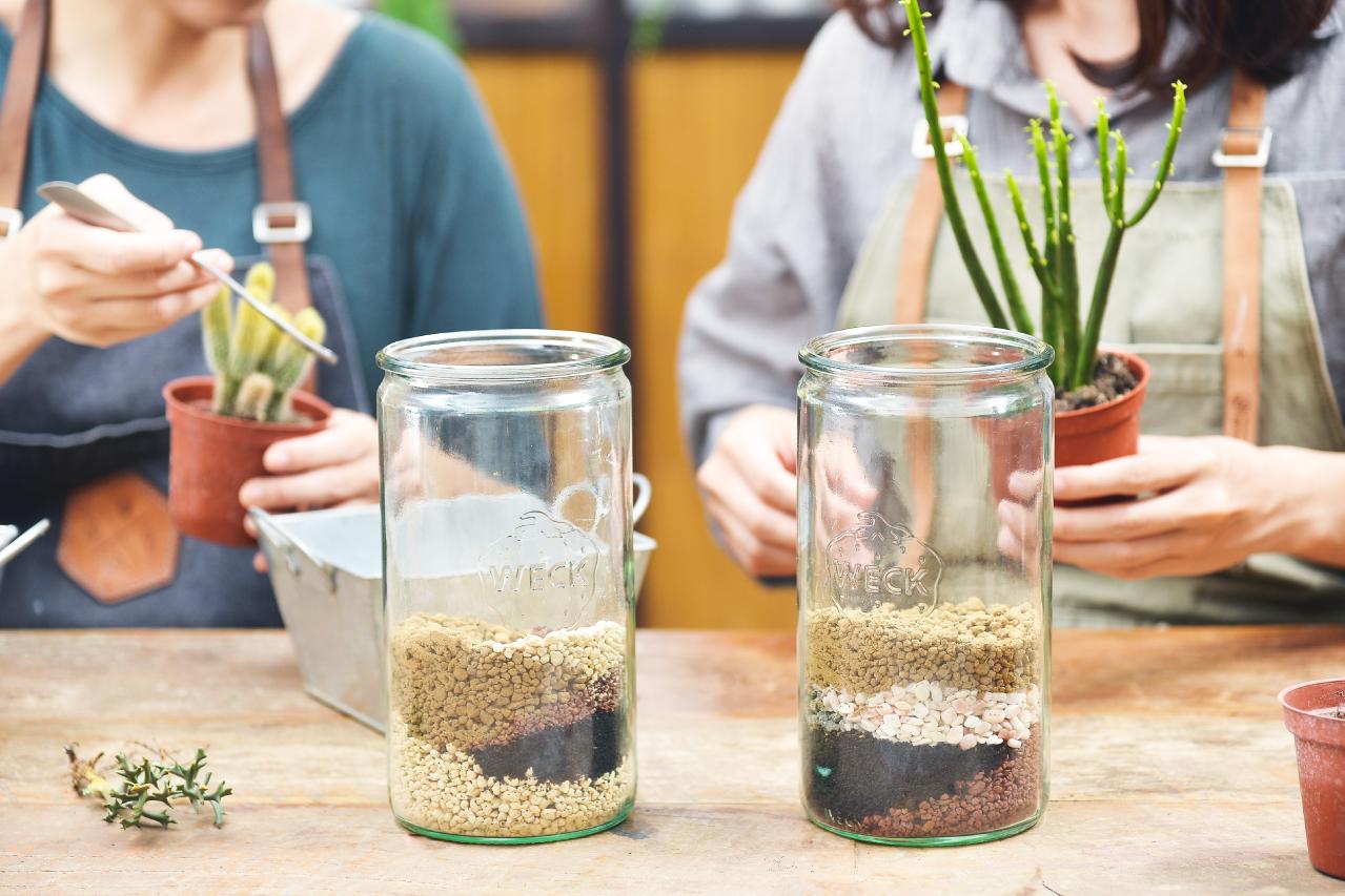 看起來像是提拉米蘇一樣的土壤分佈,擺在家裡絕對是增加視覺層次的好方法