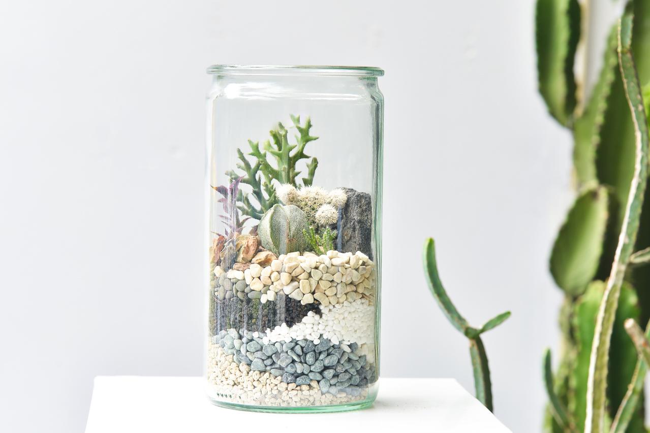 組合盆栽的美感體驗,讓你可以學到如何組合盆栽之外也能夠跟老師交流更多種植上的疑問