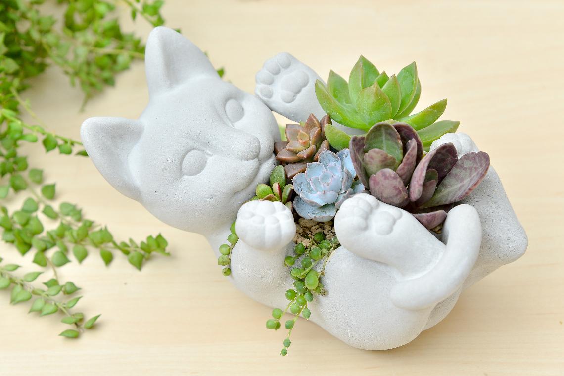 升官送禮的推薦盆栽,送給女生或者同輩的好禮物,貓型多肉植物水泥盆組合盆栽