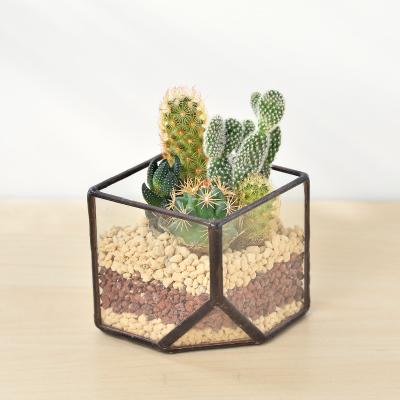 玻璃盆栽禮物