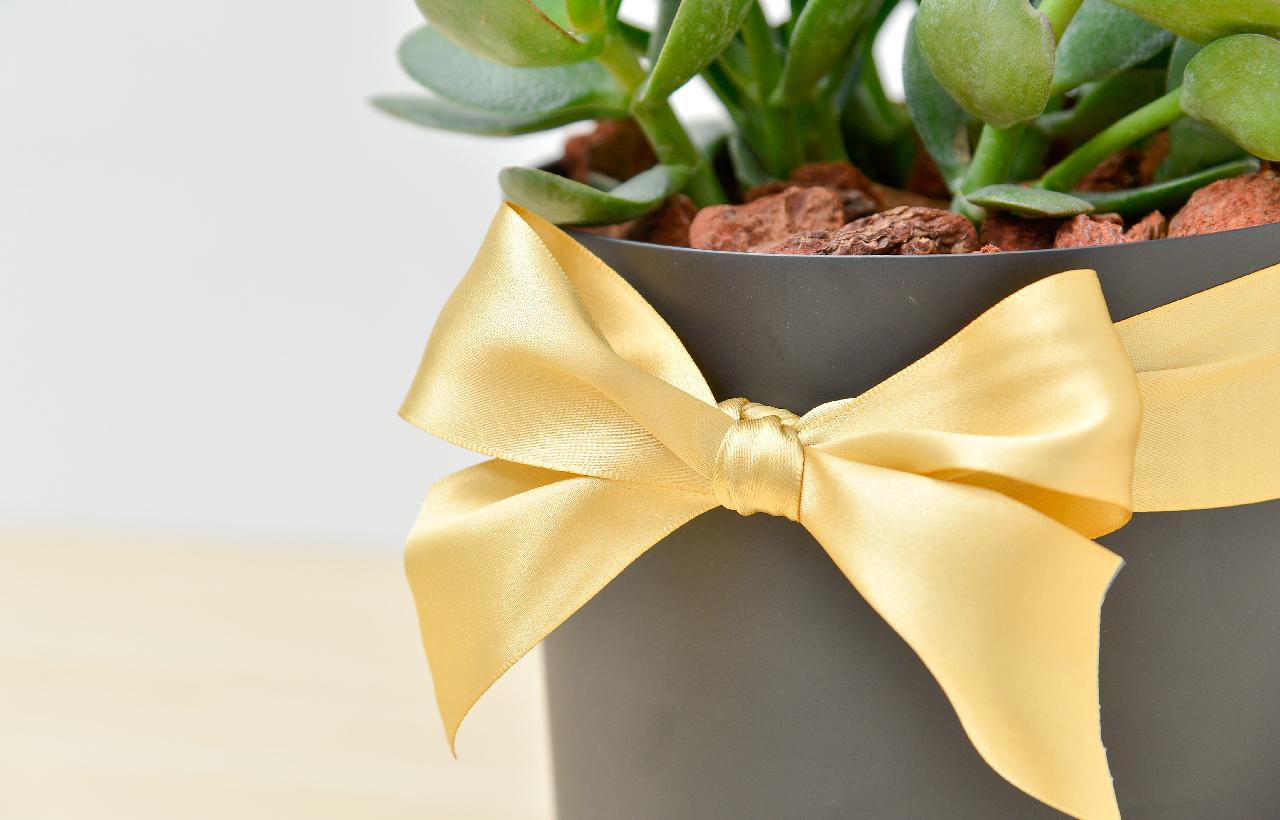 發財樹盆栽的盆器由台灣設計品牌:NMZ 設計