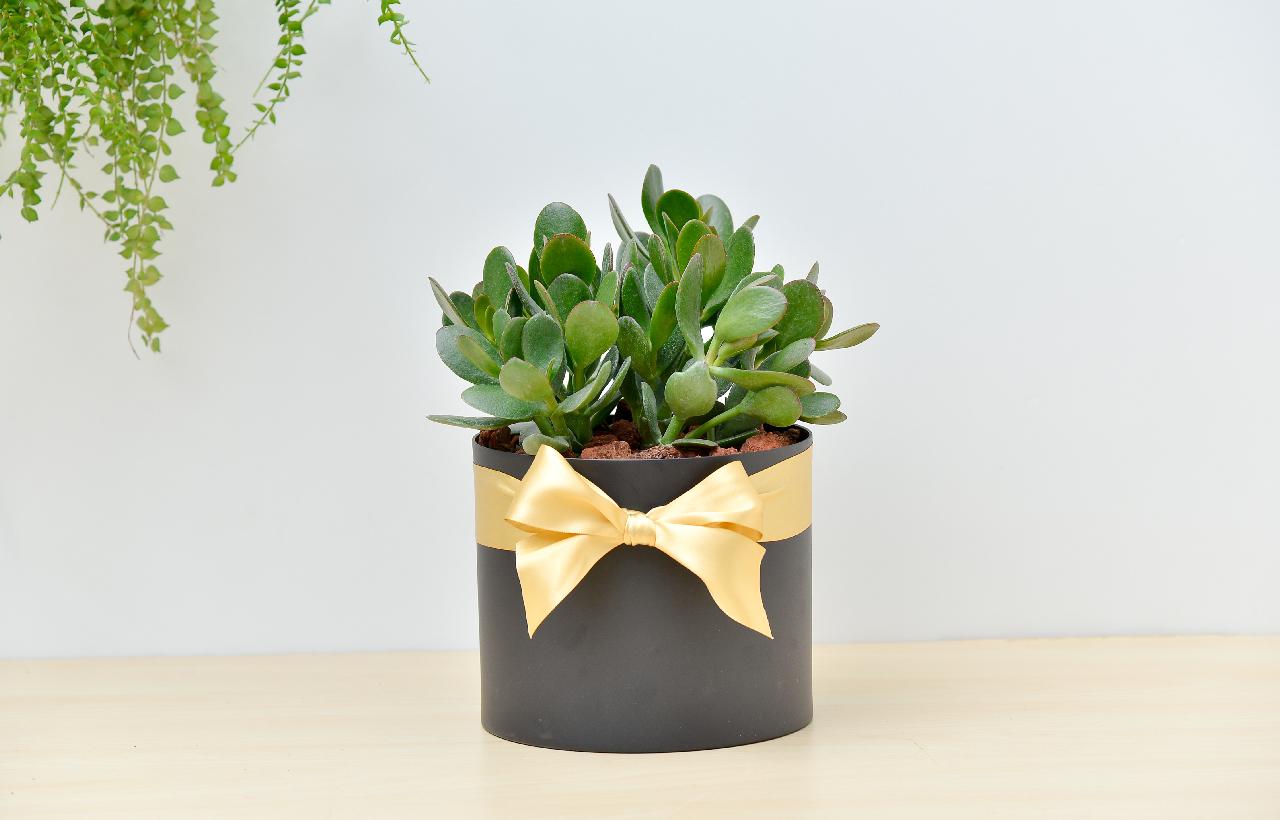發財樹盆栽,適合當 開幕賀禮、喬遷花禮、升遷禮物,搭配台灣設計師花盆