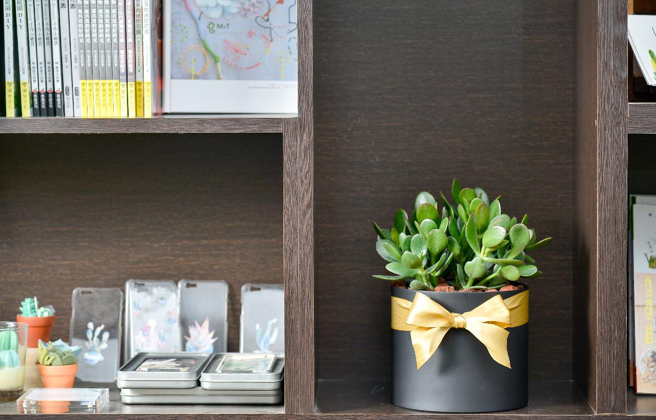 發財樹盆栽好照顧,消光黑色的盆器質感與空間搭配
