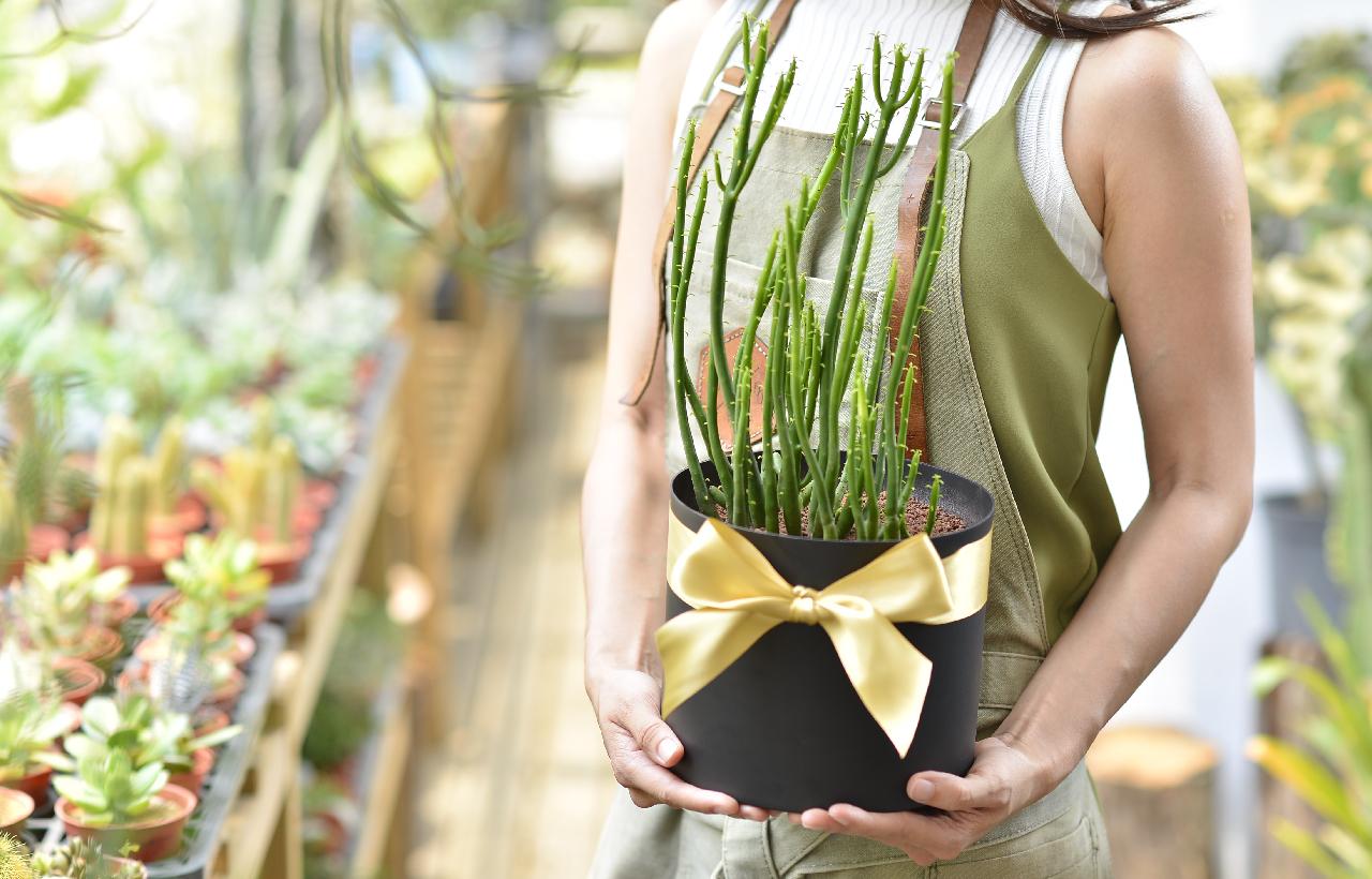 珊瑚大戟 開幕賀禮 喬遷花禮 升遷禮物 多肉植物 質感 開幕送什麼 升遷送主管這個 超好種的多肉植物