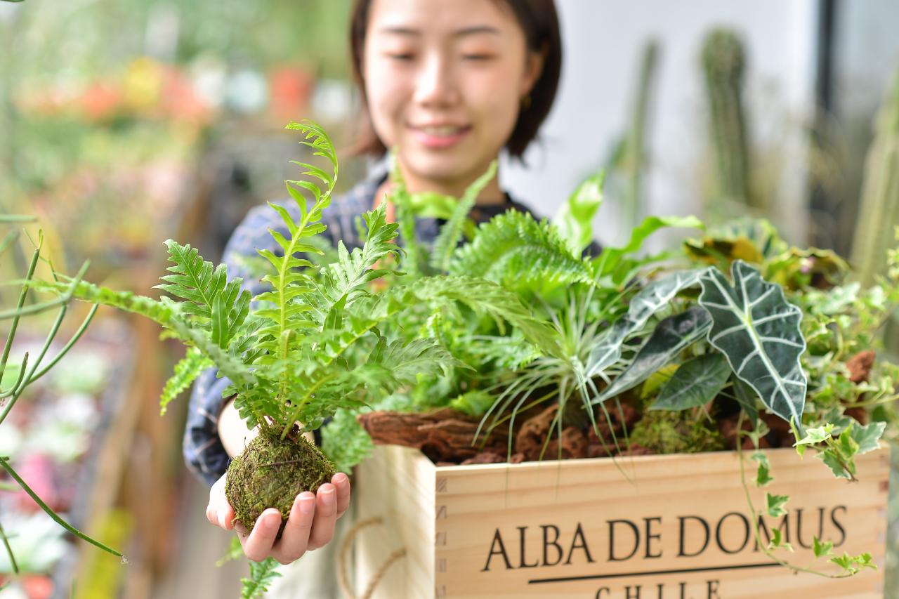 充滿綠意的開店送禮盆栽,選擇室內植物更是沒有問題
