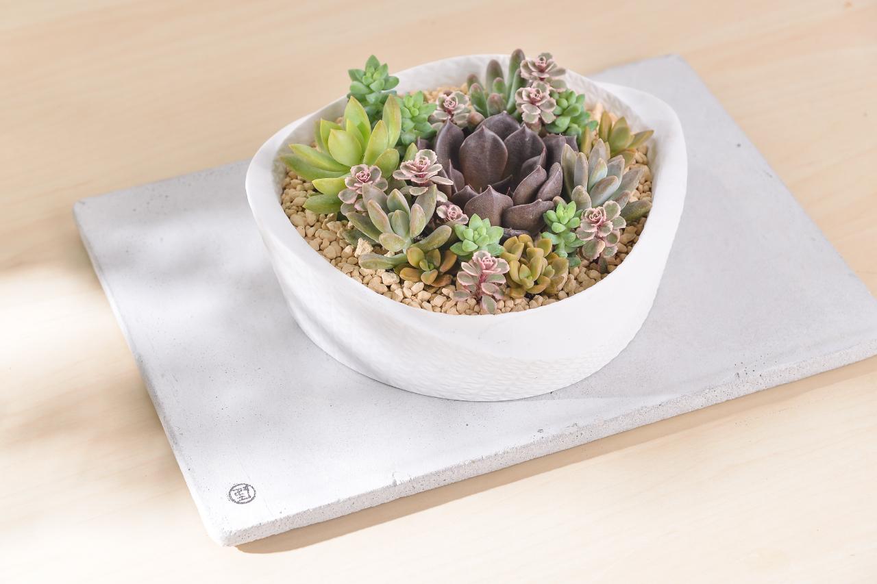 送禮盆栽可以搭配水泥墊接水盤