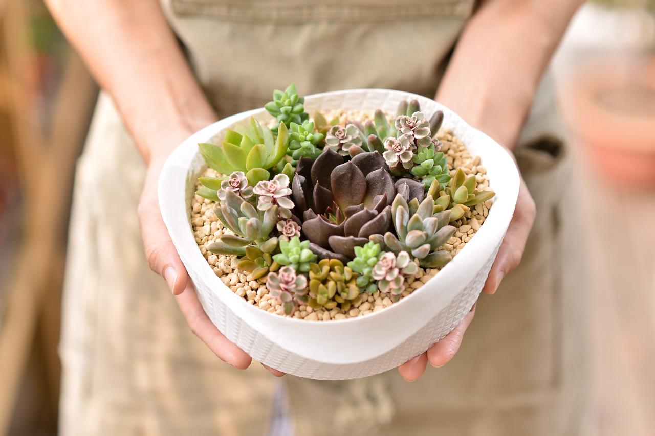 擁有一盆多肉植物盆栽是一件相當幸福的事情,擺在桌上也非常適合